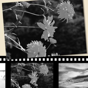 白黒フィルム現像